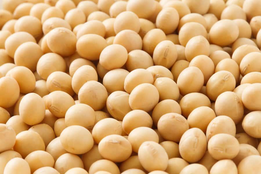 牛乳を使って育乳をするのであれば豆や豆製品を合わせて摂取するとよいでしょう